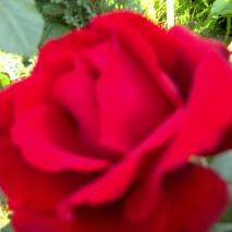 Kwiat12